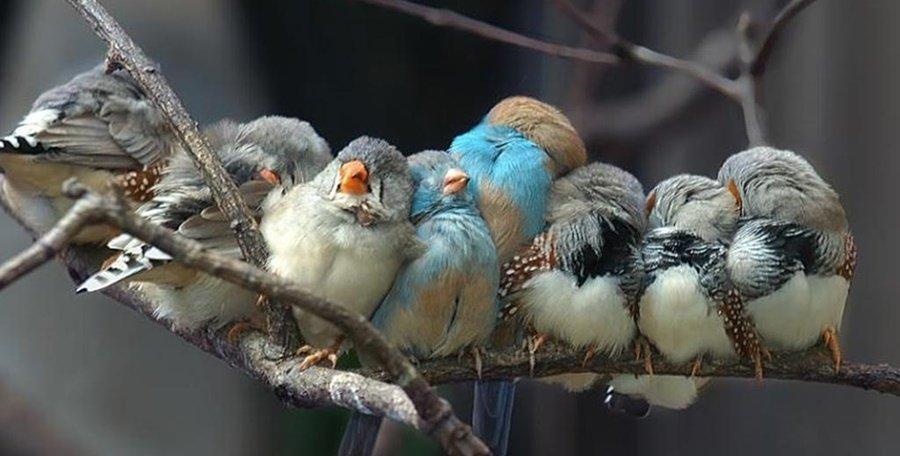 How Some Birds & Animals Sleep